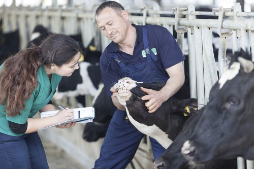 Vets respond to health and welfare strategy for Scotland's livestock