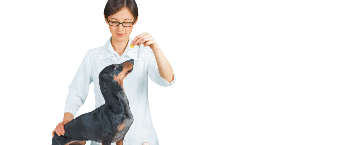 Veterinary Medication now available